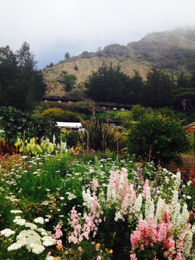 Part of the garden at Esalen